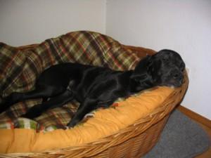 Hund schläft im Hundekorb